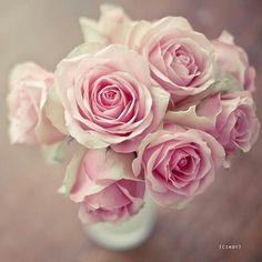 I Love flowers