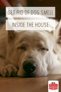 Want to get the dog smell out of your house? If you love dogs, one side effect is dog odor in your house, carpet and furniture. Whether it's just dog smell or cones from dog urine or other places, here are some tips on how to get rid of dog smell in your Dog Urine, Pet Odors, Puppy Training Guide, Dog Smells, Easiest Dogs To Train, Dog Pee, Funny Dog Pictures, Therapy Dogs, Image Hd
