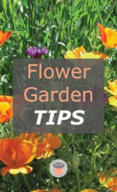 These flower garden tips are the tip of the iceberg - no pun intended, but should give some guidelines for your most beautiful flower garden to date. #flowergarden #gardening #gardeningtips Vertical Garden Plants, Vertical Garden Design, Shade Garden Plants, Succulent Landscaping, Landscaping Tips, Succulents Garden, Garden Tips, Garden Projects, Garden Ideas