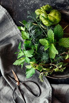 Fruit And Veg, Fruits And Vegetables, Herb Garden, Vegetable Garden, Indoor Garden, Fresh Green, Kraut, Fresh Herbs, Farm Life