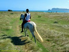 Our new white stallion in St.Lucia