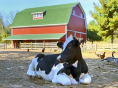 9 Ways to Keep the Smell Out of Your Barn - Reduce unwanted odors on your farm to keep your animals healthy and your neighbors satisfied.