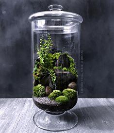 I've had this apothecary jar sitting around my studio for almost 4 years and I f… – Terrarium Terrariums, Bottle Terrarium, Small Terrarium, Bottle Garden, Indoor Garden, Indoor Plants, Terrarium Centerpiece, Decoration Plante, Paludarium