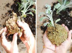 Kokedama, plant, tutorial, easy, steps, diy