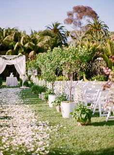 Petals strewn down the aisle on the Monte Vista Lawn.  Photography By / http://laciehansen.com,Planning By / http://ccmemorymakers.com