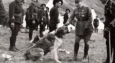 1938 general Maurice Gustave Gamelin with Saint Bernard