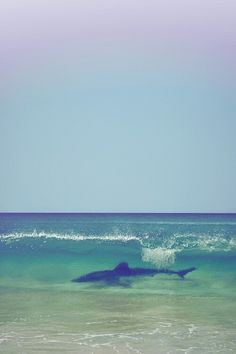 Shark! Seriously love!!!!! I'm so jealous I was not there!!!!! Argh!!!!