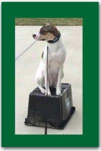 dog training st johns county Florida.  http://www.sithappensjax.com/