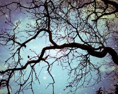 Tree Photography  Starry night sky periwinkle blue by LupenGrainne, $30.00