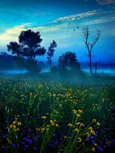 Morning Song  by Phil~Koch
