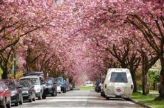 Why everyone should see Vancouver in the Spring!