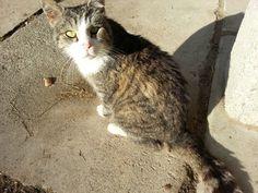 Katze auf dem Bauernhof Cats, Animals, Maine Coon Cats, Kunst, Gatos, Animales, Animaux, Animal, Cat