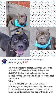 8/10/16 PLEASE HELP SCR OUT!! ADOPTER BACKED OUT!! /ij  https://m.facebook.com/story.php?story_fbid=983372775105111&substory_index=0&id=268612969914432&__tn__=%2As
