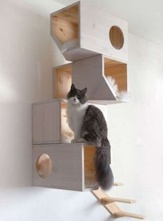 Arbre à chat et cubes de bois