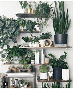 » plant life » indoor houseplants » boho decor » jungalow » cacti & succulents » (bedroom with vanity)