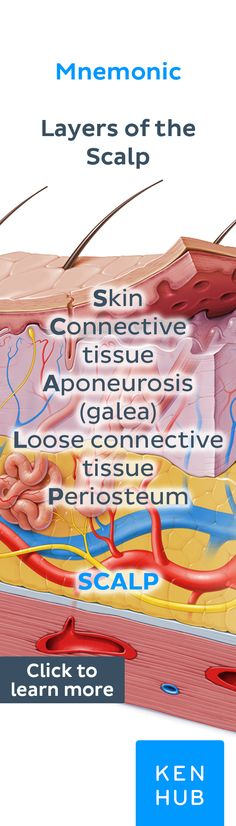 New skin anatomy and physiology Ideas How To Study Anatomy, Skin Anatomy, Nursing Mnemonics, Medical Terminology, Bones And Muscles, Body Systems, Pharmacology, Anatomy And Physiology, Science