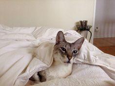 Mon chat Buddy Blur