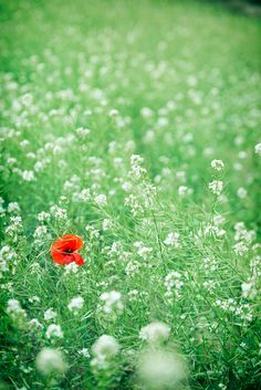 grass and red flower