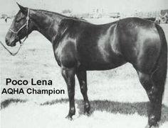 Poco Lena