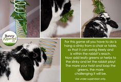 Slinky DIY Rabbit Toy. Use under supervision only! http://bunnyapproved.com/diy-rabbit-toy-ideas/