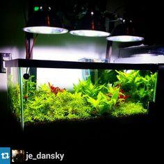 Follow Aquathusiast For Great Aquascape Features, News And Reviews!  #plantedtank #aquascape #aquascaping #plantedaquarium #fantankfriday |  Pinterest ...