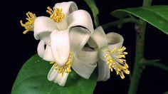 Mais belezas da M& Natureza! Encante-se com o desabrochar das flores silvestres! My Flower, Flower Power, Lotus Flower, Spring Art, Spring Time, Blooming Flowers, True Beauty, Amazing Nature, Videography