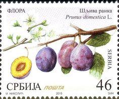 Stamp: Plum (Šljiva ranka) - Prunus domestica L. (Serbia) (Flora - Fruits) Mi:RS 612