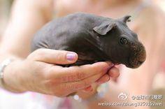 E eu achando q hipopotamos eram feios