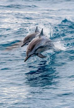 Spinner Dolphin with Baby