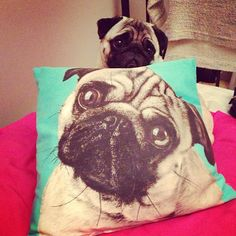 Friend: Pug's Personalized Home Decor Is 'Tasteless'