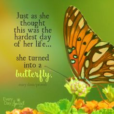 Never lose hope ~ #strength #butterfly For the app of wallpapers ~ www.everydayspirit.net xo