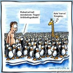 Funny cartoon - Peter, I have to tell you something. you're adopted. Oh God,,, poor guy! Penguin Meme, Penguin Cartoon, Penguin Parade, Funny Cartoons, Funny Comics, Funny Memes, Adult Cartoons, Funny Love, Funny Kids