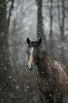 Simply stunning horse in snow Most Beautiful Animals, Beautiful Horses, Beautiful Creatures, Horse Photos, Horse Pictures, Pony Horse, Horse Gear, All The Pretty Horses, Horse Breeds