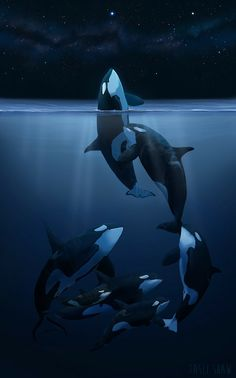 Orca Art This is how these beautiful creatures should be. Beautiful Creatures, Animals Beautiful, Cute Animals, Orcas, Orca Kunst, Le Morse, Orca Art, Wale, Funny Animal Videos