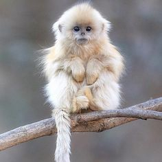 Adorable monkey
