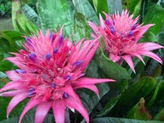 pictures of flowers pink - Google Search