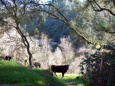 Mokelumne Hill, Ca., Mokelumne River Canyon. Feb. 2015