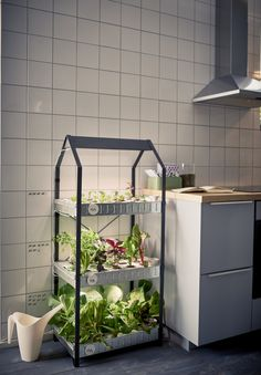 Indoor Vegetable Gardening Sustainable indoor gardening from ikea - Indoor gardening is fun and a great way to have fresh food. These indoor gardening ideas and set ups can be simple or hydroponics Apartment Garden, Grow Food Inside, Home Hydroponics, Grow Lights, Indoor Gardening Kit, Indoor Plants