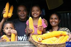 A family displays healthy ears of corn harvested from their farm in East Timor, better storage solutions mean they'll have enough corn stored to make it through the lean season. Photo by Jennifer Hardy/CRS