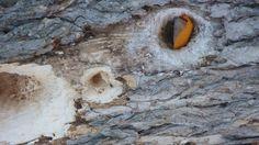 Roche nomade installée au creux d'un arbre au Lac-Des-Écorces. Photo : Luc Paquette. Pour plus de détails sur le projet Roches nomades : www.museelaurentides.ca/roches-nomades.