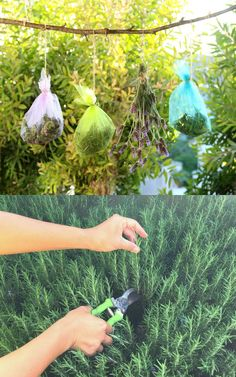 Super useful hacks to dry herbs quickly & easiy! Pros and cons of 4 common ways of drying herbs: air drying, in a food dehydrator, oven or microwave. Lots of helpful tips! - A Piece of Rainbow Easy Garden, Herb Garden, Vegetable Garden, Garden Hose, Garden Ideas, Container Gardening, Gardening Tips, Indoor Shutters, Canned Food Storage