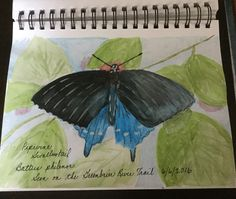 Experimenting with watercolors while identifying butterflies. Journal Pages, Journals, Nature Study, Nature Journal, Biology, Art Lessons, Watercolors, Butterflies, Plant Leaves