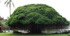 Ten strikingly beautiful trees that seem to have come from another world