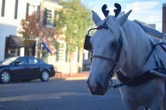 When the carriage horses sprout antlers, you know it's about to be the Most Wonderful Time of the Year in Downtown Fredericksburg. Make plans to hit the streets this weekend for the annual Holiday Open House http://www.visitfred.com/blog/five-fun-features-of-holiday-shopping-downtown-fredericksburg #fxbg #loveva #shoplocal