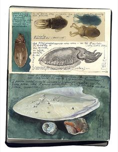 sketchbook . Stefano Faravelli