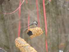 Bird feeders made out of toilet paper and paper towel rolls.     Spread peanut butter and roll in bird seed.