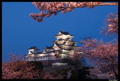 Blue hour sakura at Himeji-jo, Japan by Dan Wiklund