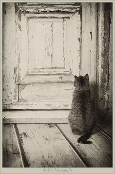 "gatinhamel:  "" Let me in…. by Judith van der Graaf  """