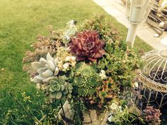 Another one of my succulent arrangements. Looks better now the succulents have had time to grow!
