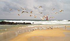 Free photo: Sea, Lighthouse, Seagull, Waves - Free Image on Pixabay - 1752962